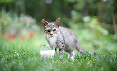 kitten, in the wild