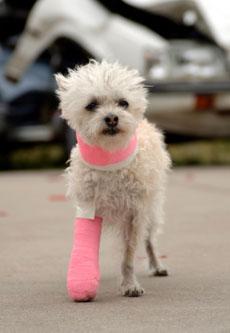 pet's health insurance