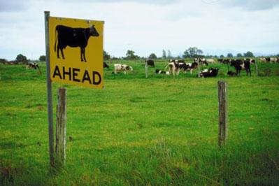 livestock, pasture
