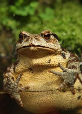 frog, aquarium