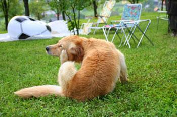dog, lyme disease