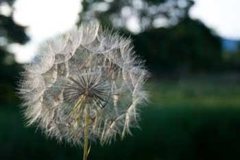GM, superweeds, killer weeds