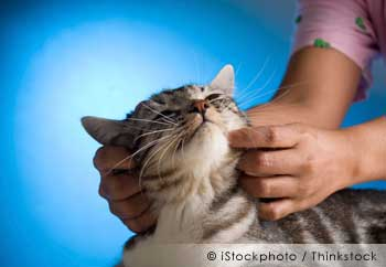 Massage: How This Hidden Technique Can Improve and Restore Your Pet's Health