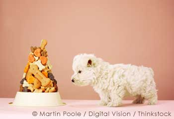 Mountain of Pet food