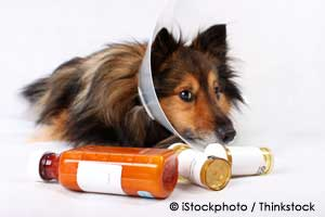 Pet with a lot of medication