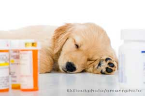 Harmful Human Medications for Pets