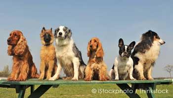Six Pet Dogs