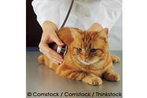 reduce feline stress during vet visits
