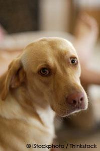 treating dog urine dribbling