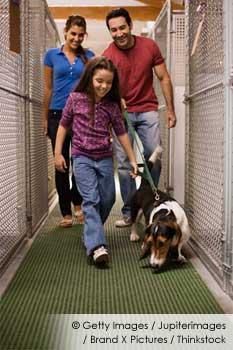 Adopting Pet Dogs