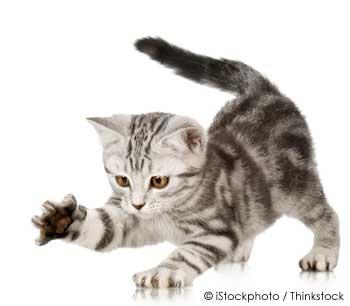 Pet Cat Scratching