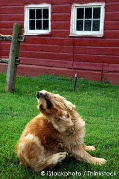 Pet Dog Scratching