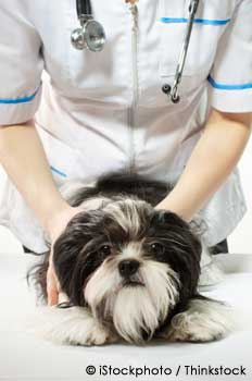Pet recieving Veterinary care