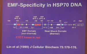 EMF Specifity in HSP70 DNA