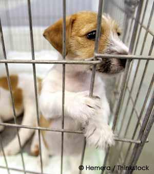 Caged pet dog