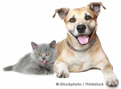 Ten Interesting Differences Between Pet Cats and Dogs