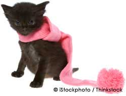 Cute Pet Kitten with Pink Scarf