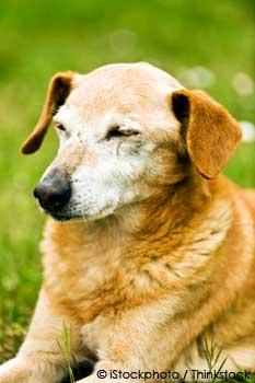 hearing and vision loss on pets