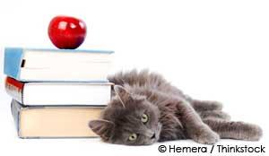 pet friendly schools