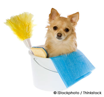 Spring Cleaning with your Pet