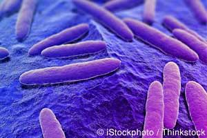 Bacteria Intestinal
