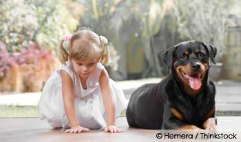 Pet Child Safety