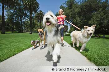 Image of: Health Benefits Dog Walking Take The Lead Services Walking Your Dog How To Do It Right And Why Its So Important