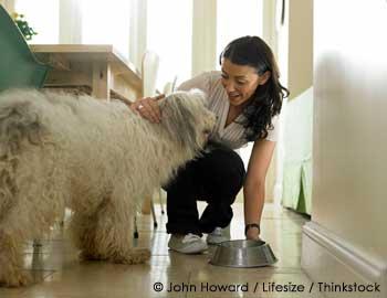 Feeding Your Pet Dog
