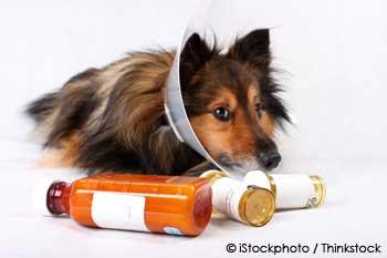 Sick Pet