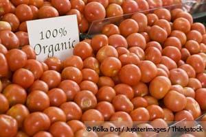 유기농 토마토는 작지만 영양이 많습니다