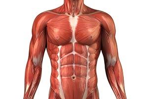 Starzenie się mięśni
