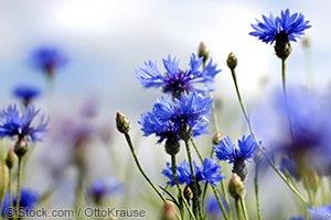 可食用的-花卉