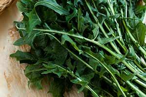 Jakie korzyści daje jedzenie liści mniszka?