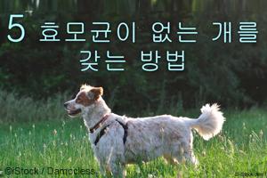 개에게서 냄새가 나고 몹시 가려워한다고요? 효모 감염이 문제일 수 있습니다...