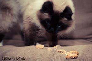 Les causes les plus fréquentes de vomissement chez le chat...