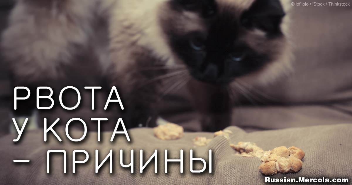 Рвота у кота: причины, лечение, профилактика