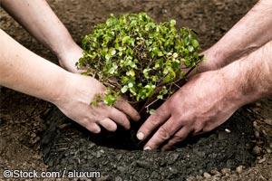 种树的好处