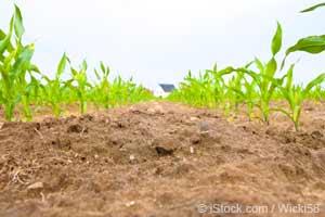 土壌、GMO