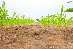 Sols-OGM