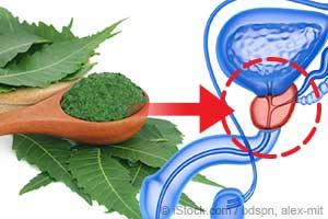 Le neem se montre prometteur pour le traitement du cancer de la prostate