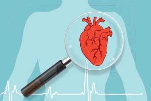11 faits passionnants à propos du cœur humain