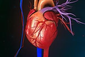 Uma em Cada Três Mortes Causadas por Doenças Cardiovasculares Pode ser Prevenida