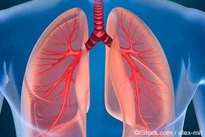 人体呼吸系统解剖图