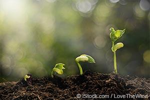 Alimentos Que Enchem de Energia Sua Primavera
