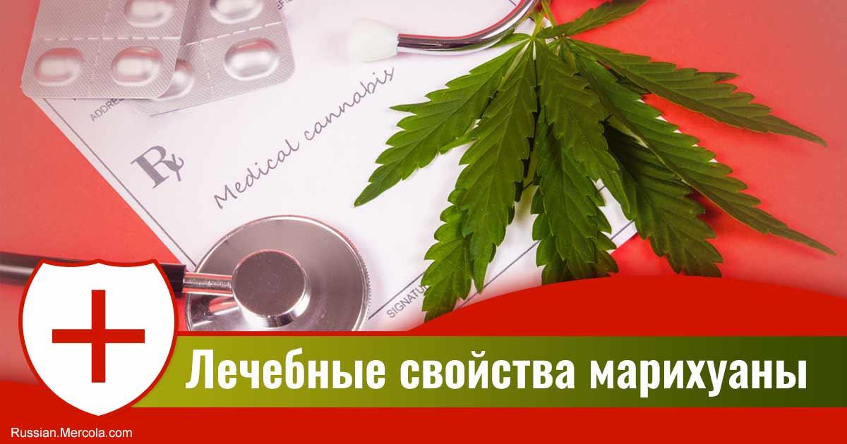 Марихуана в лечебных действиях самые низкорослые сорта марихуаны