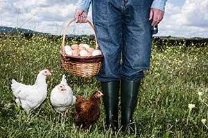 Bio, Bodenhaltung, Freilandhaltung oder Weidehaltung... Sortierung der verwirrenden Eieretiketten
