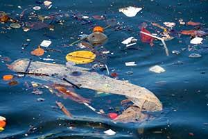 Das Meer könnte kann bald mehr Plastik als Fisch enthalten