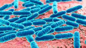 Alimente Bem os Micróbios do Seu Intestino, Para que Eles Não se Alimentem de Você