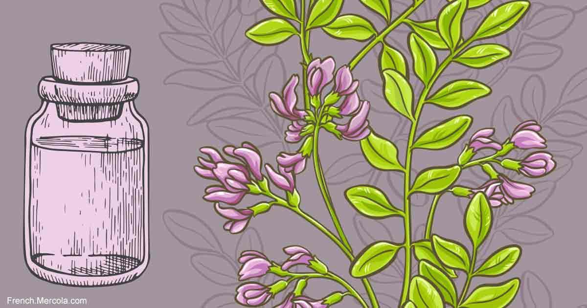 Ou Acheter De L'Astragale : Code avantage - Herbes - Avis | Pourquoi faire une cure ?
