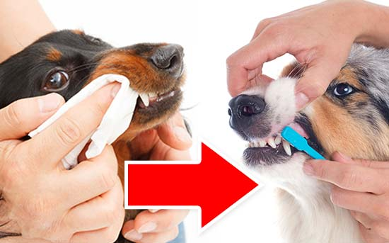 반려견의 치아 관리하기